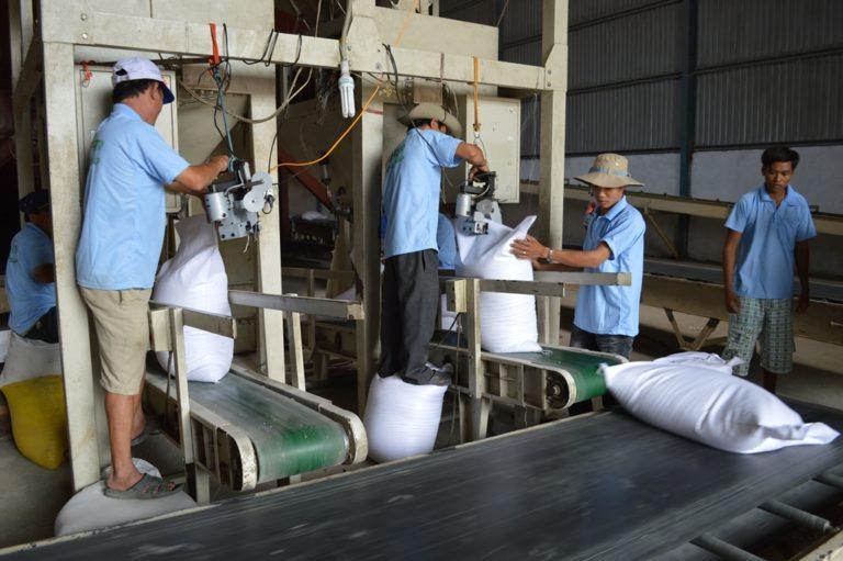 Kết quả hình ảnh cho băng tải gạo